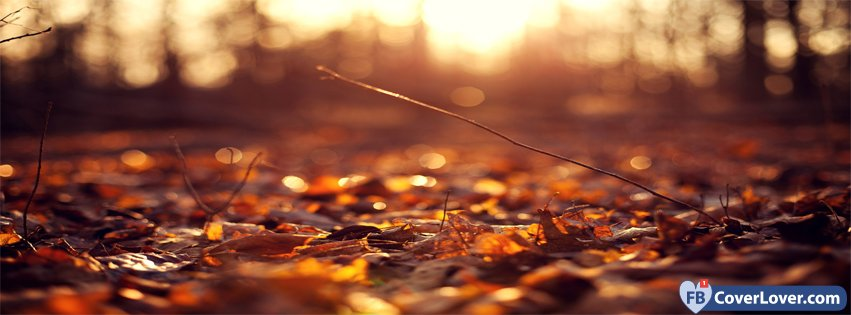 10-21-2016-autumn-forest-2-facebook-covers-fbcoverlover_facebook_cover