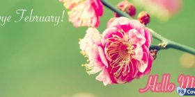 Goodbye-February-Hello-March-Facebook-Covers-FBcoverlover55_facebook_cover